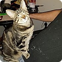 Adopt A Pet :: Marvel - Kansas City, MO