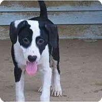 Adopt A Pet :: Elroy - Albany, NY
