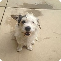 Adopt A Pet :: Taffy - Oceanside, CA