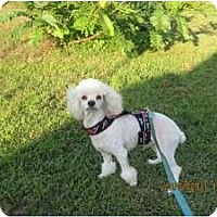 Adopt A Pet :: Frankie - N. Fort Myers, FL