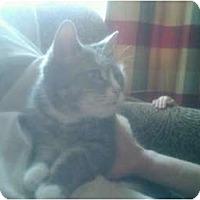 Adopt A Pet :: Jen - bloomfield, NJ