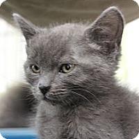 Adopt A Pet :: Normandy - Santa Monica, CA