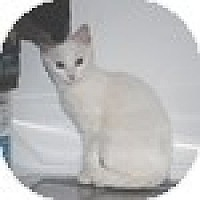 Adopt A Pet :: Abee - Vancouver, BC