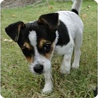 Adopt A Pet :: Jill - Arlington, TX
