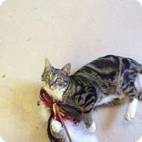 Adopt A Pet :: Cypress - Washington, VA