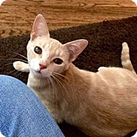 Adopt A Pet :: Egypt - Colorado Springs, CO