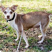 Adopt A Pet :: Azalea - Houston, TX