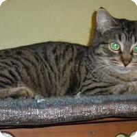 Adopt A Pet :: Sandy Claus - Pardeeville, WI