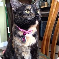 Adopt A Pet :: Bonita - Miami, FL