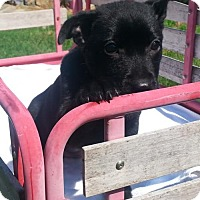 Adopt A Pet :: Raven - Seaford, DE