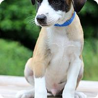 Adopt A Pet :: Sinbad - Waldorf, MD