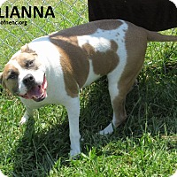 Adopt A Pet :: Emilianna  SOS - Elizabeth City, NC