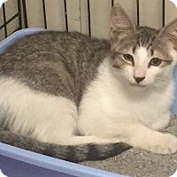Adopt A Pet :: Dempsey - River Edge, NJ