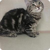 Adopt A Pet :: Romeo - Walnut Creek, CA