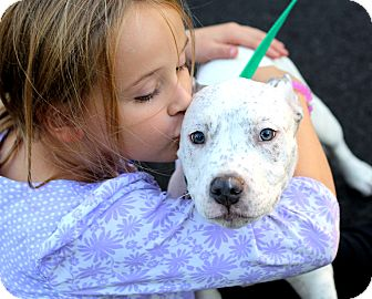 American Pit Bull Terrier Mix Puppy for adoption in Reisterstown, Maryland - Turbo