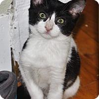 Adopt A Pet :: Archie - Fort Collins, CO