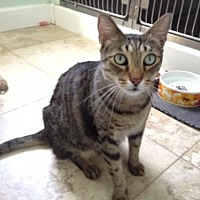 Adopt A Pet :: Angel - West Palm Beach, FL