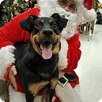 Adopt A Pet :: Bowser - Colmar, PA