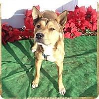 Adopt A Pet :: OSO- also see BLACK & TABY - Marietta, GA