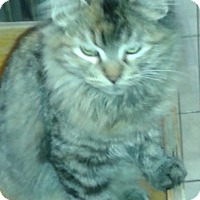 Adopt A Pet :: Rahma - Whittier, CA