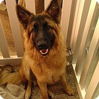 Adopt A Pet :: Wookie - Thousand Oaks, CA