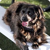 Adopt A Pet :: KISSES - Los Angeles, CA
