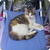 Adopt A Pet :: Skittles - Ocala, FL