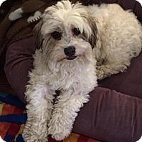 Adopt A Pet :: Oliver - Atascadero, CA
