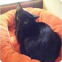 Adopt A Pet :: Sasha - Brea, CA