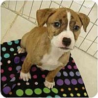 Adopt A Pet :: Minerva - Phoenix, AZ