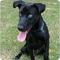 Adopt A Pet :: George - Mocksville, NC