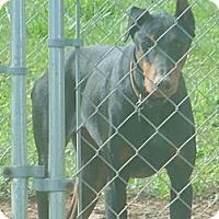 Adopt A Pet :: TANK - ROCKMART, GA