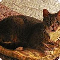 Adopt A Pet :: Sebastian - N. Billerica, MA