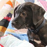 Adopt A Pet :: Rita - Marietta, GA