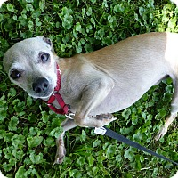 Adopt A Pet :: Nugget - Wyanet, IL