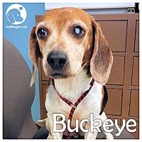 Adopt A Pet :: Buckeye - Pittsburgh, PA