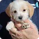 Adopt A Pet :: Charlie Brown