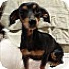 Adopt A Pet :: Puddin