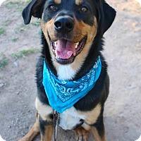 Adopt A Pet :: Rangel - Austin, TX