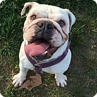 Adopt A Pet :: Sookie - Santa Ana, CA