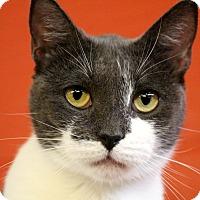 Adopt A Pet :: Sara - Sarasota, FL