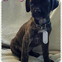 Adopt A Pet :: Judy - Garden City, MI