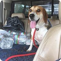 Adopt A Pet :: Buddy - cicero, NY