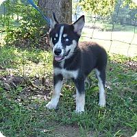 Adopt A Pet :: Shem - Bedminster, NJ