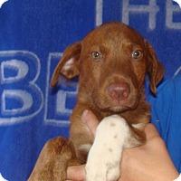 Adopt A Pet :: Raider - Oviedo, FL