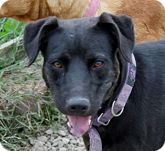Shepherd (Unknown Type) Mix Dog for adoption in Grinnell, Iowa - Chikis