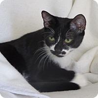 Adopt A Pet :: PLAYFUL CIRQUE & SOLEIL - New York, NY