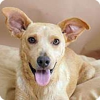 Adopt A Pet :: Doodles - Sudbury, MA