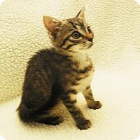 Adopt A Pet :: Tuffie - Burgaw, NC