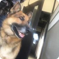 Adopt A Pet :: BonBon - Visalia, CA